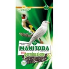 Manitoba- Graines Haute germination 2.5kg